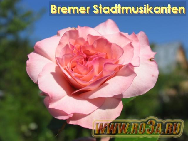 Die Bremer Stadtmusikanten  German Reading Lesson